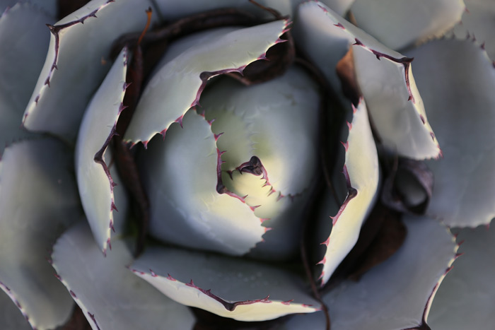 succulent_700