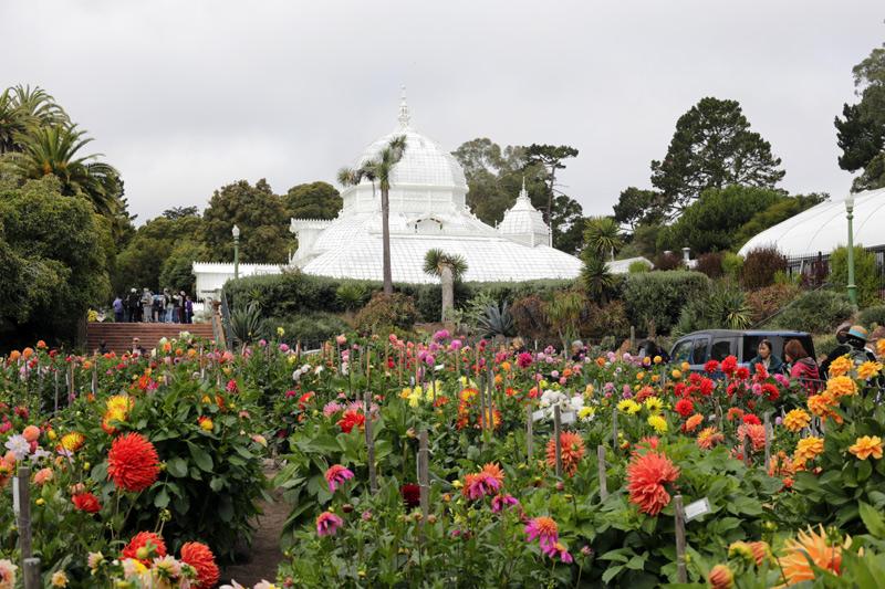 dahlia_garden_800