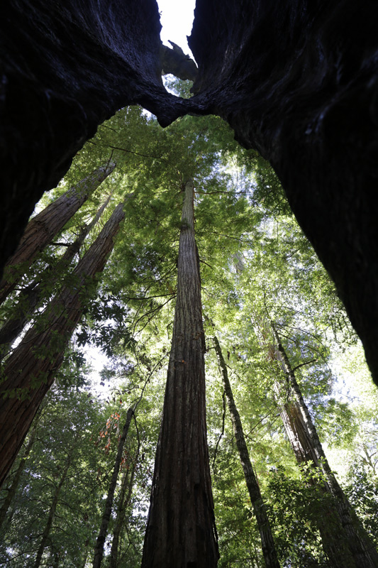 trees_vertical_800